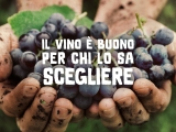 La vendemmia etica dei viniValdibella